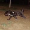 Coco (boy pup)_005