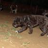Coco (boy pup)_003