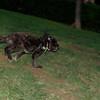 Coco (boy pup)_002