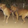 Tyson & Rhumba 2