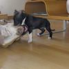 sade keep tyson puppy home