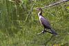 AZ State Parks Family Campout - Patagonia Lake - 4/7-8/18