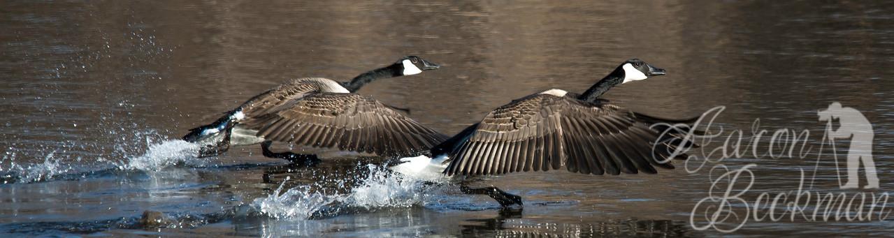 Running Geese 12x45