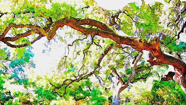 Ab. Treeflect