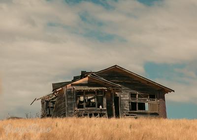 Startling Derelict in a Summer Field