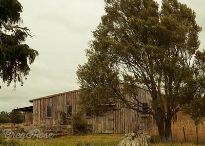 Tree Barn and Field