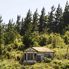 Grand abandoned home