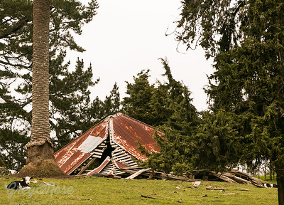 Collapsed House near Waimate North.