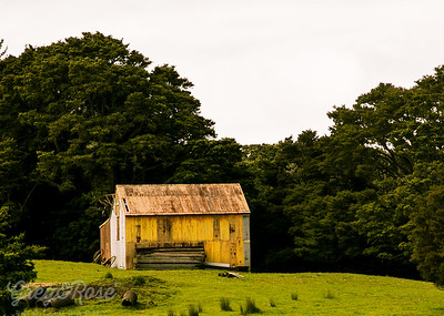 Yellow Barn
