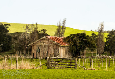 Derelict house and Tree close to Waipoua forest