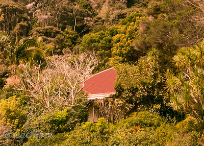 Hidden up in the Bush in Kaeo-
