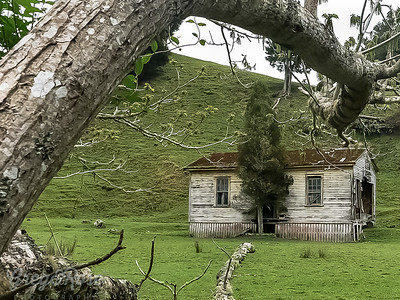 House with its own Tree