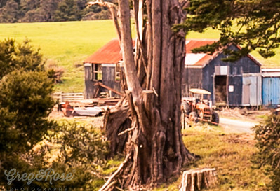 Tree and a large farm shed