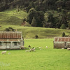 Two Cottages and a Paddock