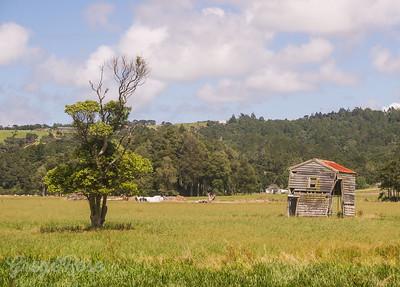 Butchery and a Tree Kaukaupapa