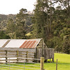 Barn in a Field near Puhoi