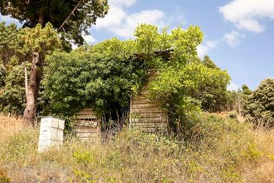 House growing a bush in Scotsdale, Tasmania.
