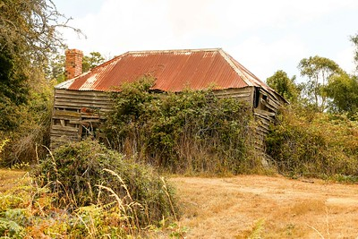 Abandoned home in West Tamer, Tasmania, with its own vegetation
