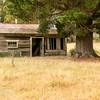 Character abandoned house under a tree in Sringfield , Tasmania