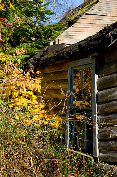 An old cabin near the Cut River Bridge.  -  October, 2008