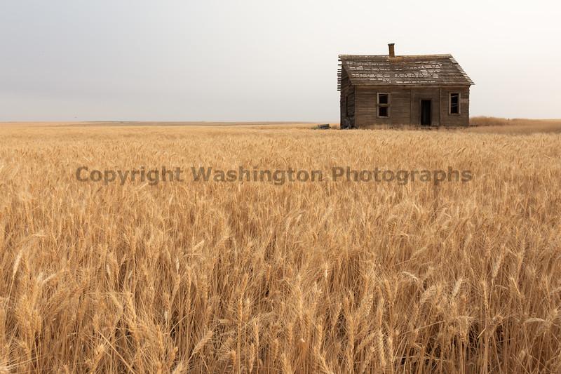 Abandoned House 465