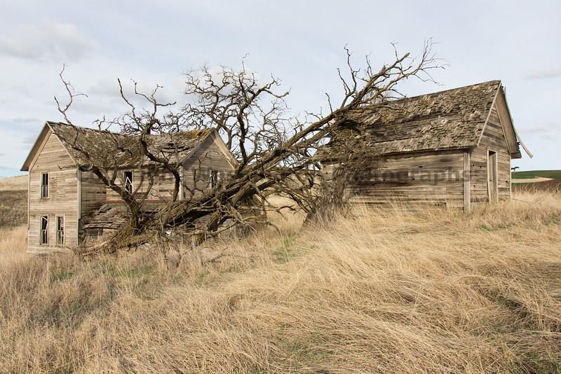 Abandoned House 132