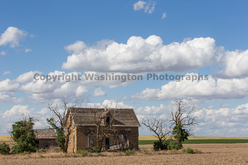 Abandoned House 313