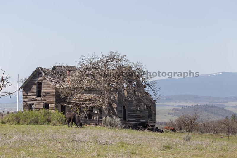 Abandoned House 429
