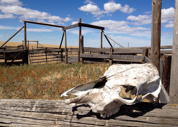 High Lonesome Cattle Station.