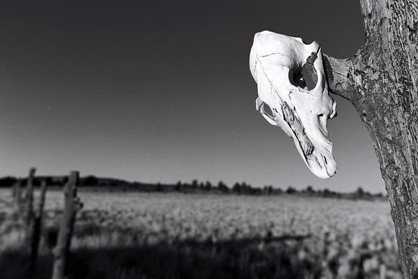 Skull & Fencepost.