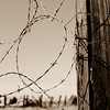 barbed wire...