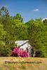 Old House with Azalea Bush, Wayne County, North Carolina
