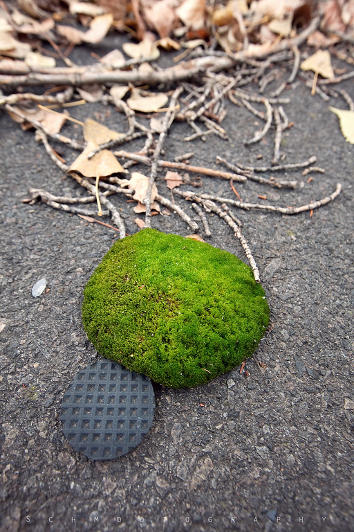 I've read that the generic tours that most people go on advise tourists to stay off the moss because it's highly radioactive. It is slightly higher on moss than on asphalt, but what is most interesting is how aggressive it is. Moss grows seemingly spontaneously on the ground, just like The Blob. It dots the pavement and slowly eats everything it encounters: twigs, branches, even man-made debris.