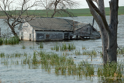 Derelict and swamped farmhouse in North Dakota.