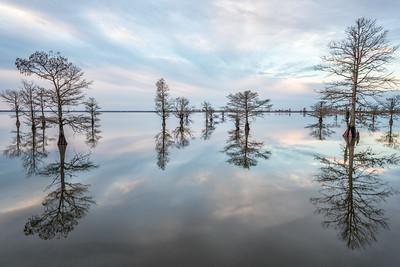 Cypress at Lake Mattamuskeet