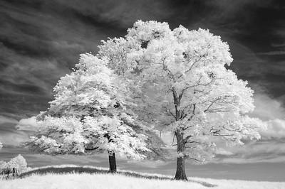 First Place Carolina Nature Photographers Association --Plant Life