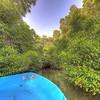 #srilanka #srilankan #mangroves #bentota #travel #visitsrilanka #mysrilanka #ceylon #serenity #serendipity