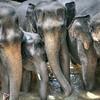 #srilankan #Srilanka #travel #visitsrilanka #mysrilanka #ceylon #elephant #elephants #elephantorphanage #pinnawala #pinnawalaelephantorphanage #truelove #valentines #valentinesday #stylesrilanka