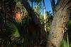 Le bush dans le parc national de Boodjamula (terre Waanyi). Queensland/Australie