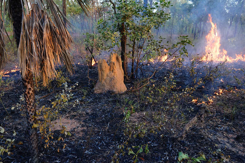 Termitière dans une zone de feu de bush. Terre d'Arnhem/Territoire du Nord/Australie