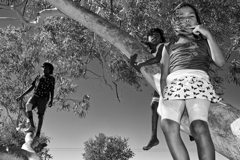 Enfants perchés sur un arbre pour observer la route à la sortie de Fitzroy Crossing. Kimberley/Australie Occidentale/Australie