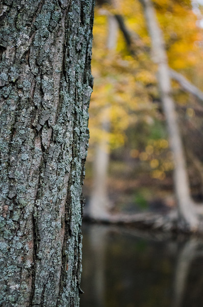 A Tree on an Autumn River (Photo by Johnny Nevin)