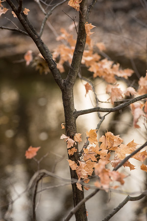 Autumn Leaves in River Light (Photo by Johnny Nevin)