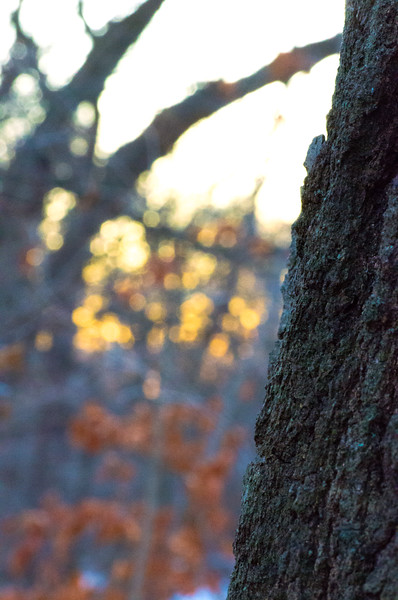 Autumn Evening Forest Color (Photo by Johnny Nevin)