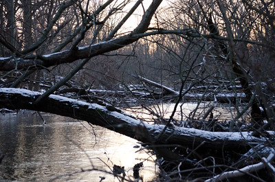 A Winter River in the Woods (Photo by Johnny Nevin)
