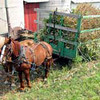 horses and cart