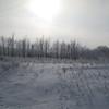 January Sun  over the trees