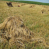amish-summer-hay