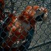 Compassionate Rescue as a Non-profit