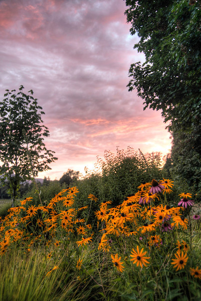 Flowers at Sunset- Oregon